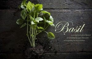 Basil, Basil, Everywhere!
