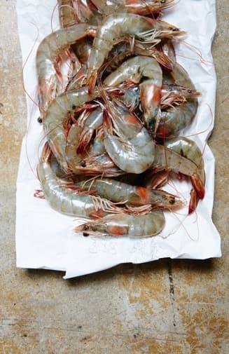 headon-shrimp5723-1